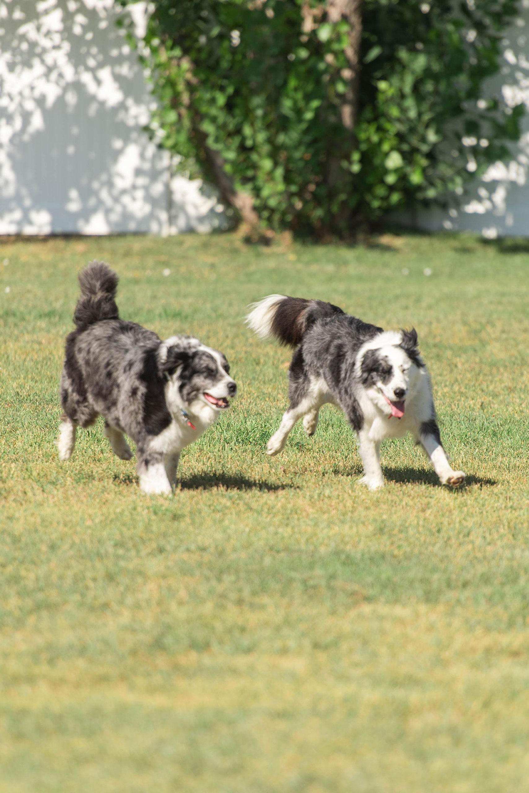 Bailey & Bandit